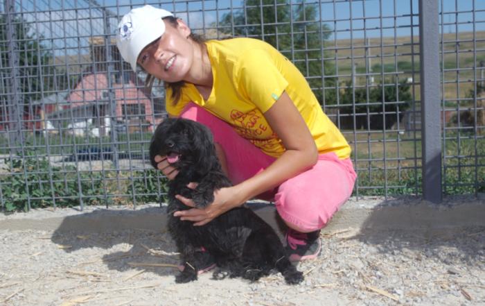 Dana og Bruneta hund