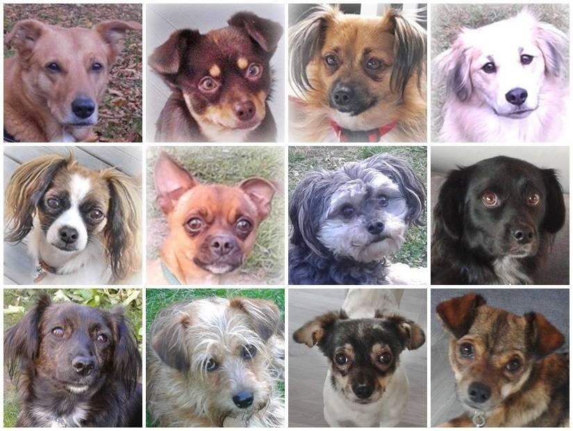 dogs_borghild