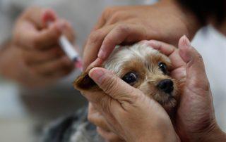 dogvaccine